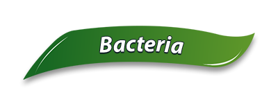 Bins So Clean Bacteria Benefits
